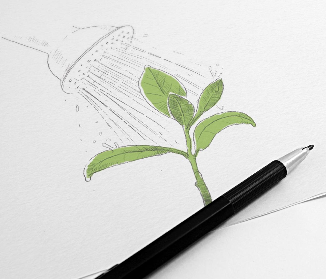 Noma Invest Illustration Pflanze